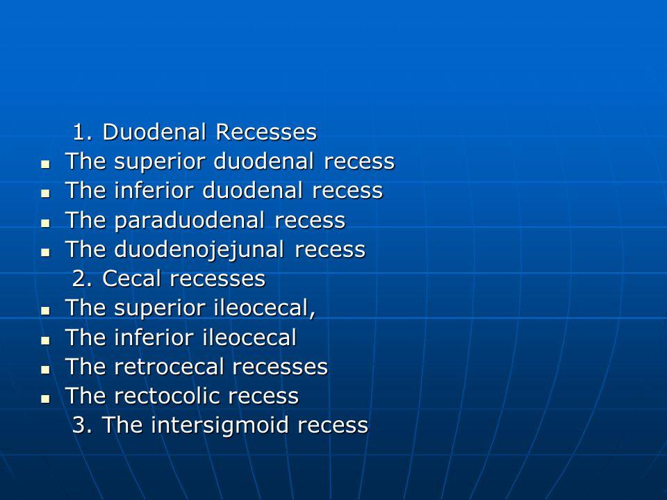 1. Duodenal Recesses 1. Duodenal Recesses The superior duodenal recess The superior duodenal recess The inferior duodenal recess The inferior duodenal