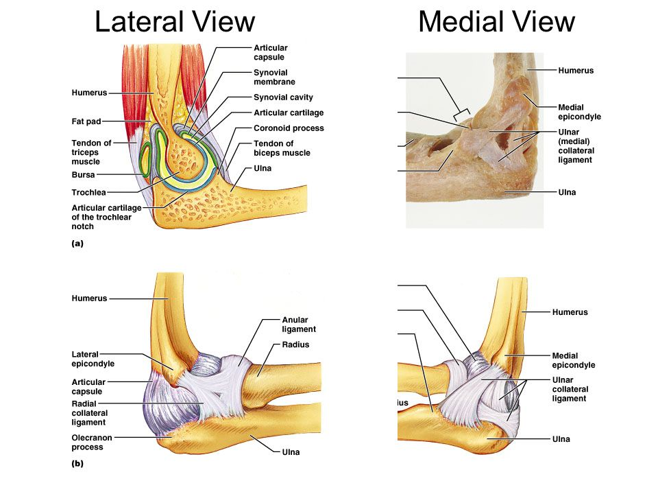 Lateral ViewMedial View