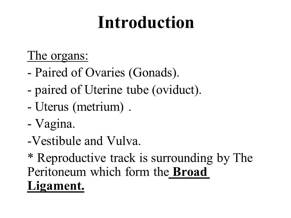 Innervation Innervation to the Clitoris : the Dorsal nerve of the Clitoris (branch of pudendal nerve ) provide somatic sensory innervation.