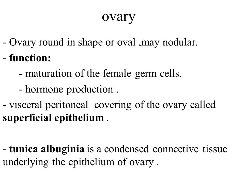 Ovarian tube