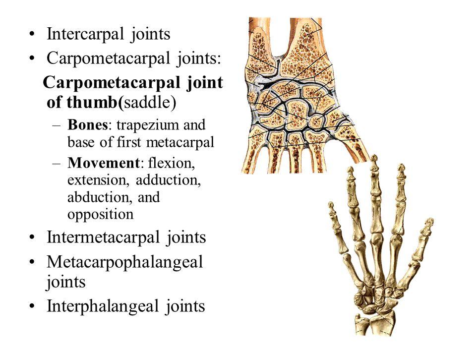 Intercarpal joints Carpometacarpal joints: Carpometacarpal joint of thumb(saddle) –Bones: trapezium and base of first metacarpal –Movement: flexion, e