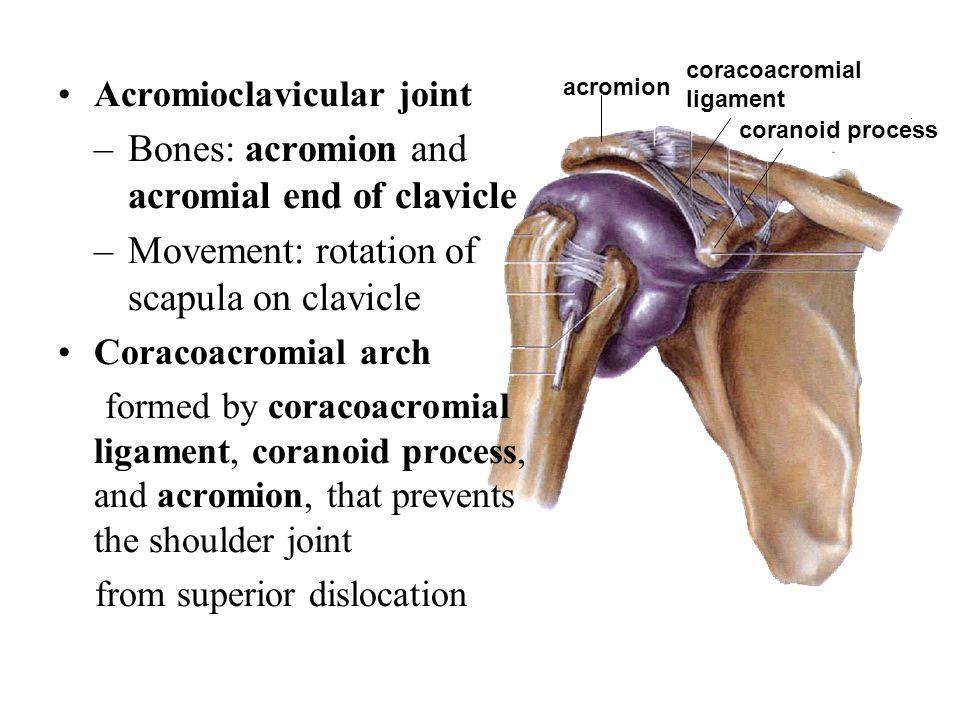 Sacrotuberous ligament Sacrospinous ligament Greater sciatic foramen Lesser sciatic foramen