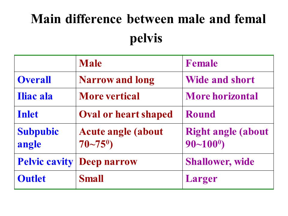 Main difference between male and femal pelvis MaleFemale OverallNarrow and longWide and short Iliac alaMore verticalMore horizontal InletOval or heart