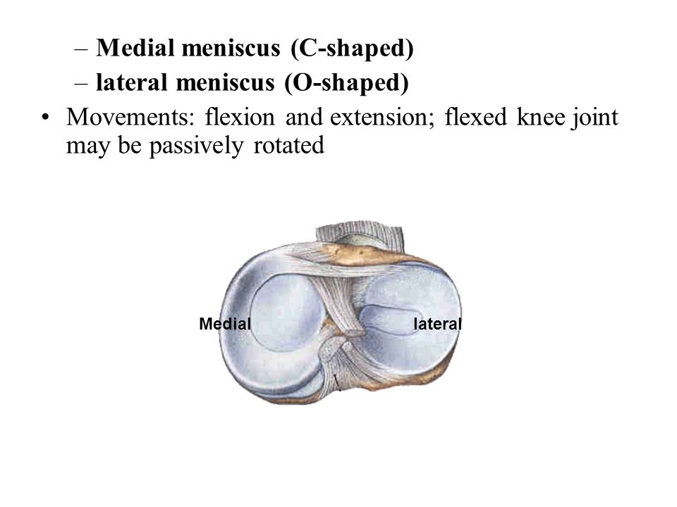 –Medial meniscus (C-shaped) –lateral meniscus (O-shaped) Movements: flexion and extension; flexed knee joint may be passively rotated lateralMedial