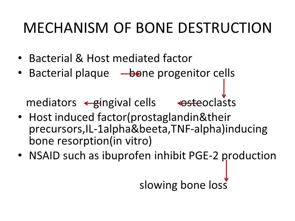 MECHANISM OF BONE DESTRUCTION Bacterial & Host mediated factor Bacterial plaque bone progenitor cells mediators gingival cells osteoclasts Host induce