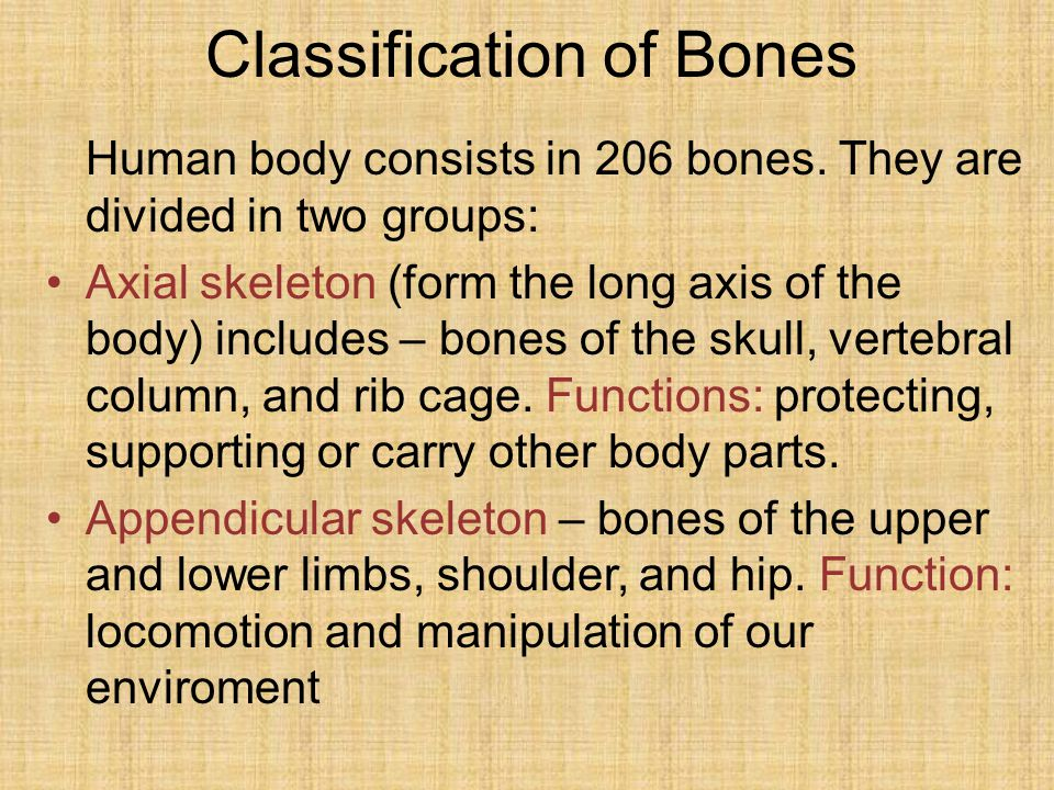 Classification of Bones Human body consists in 206 bones.