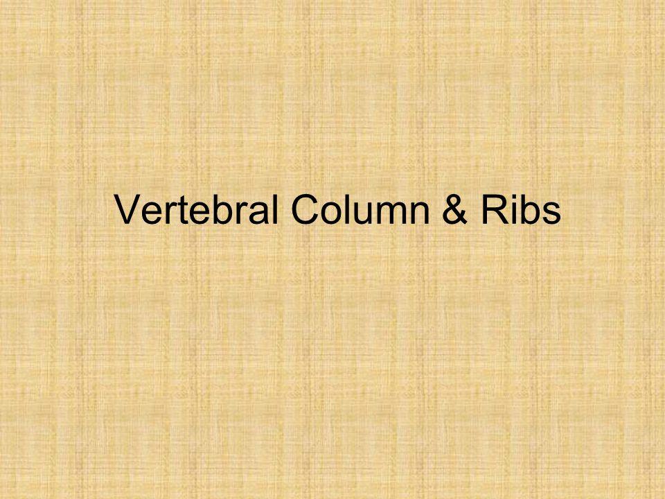 Vertebral Column & Ribs