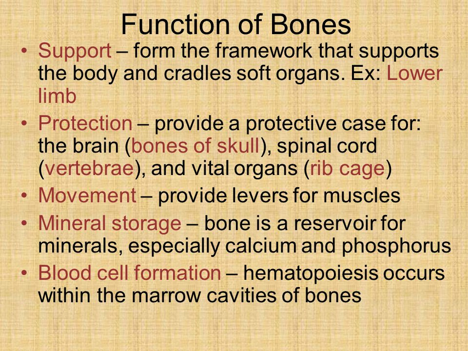 Function of Bones Support – form the framework that supports the body and cradles soft organs.
