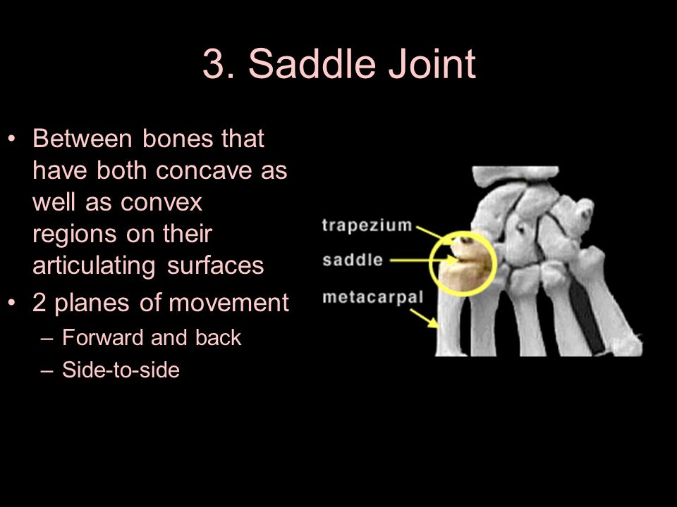 3. Saddle Joint Between bones that have both concave as well as convex regions on their articulating surfaces 2 planes of movement –Forward and back –