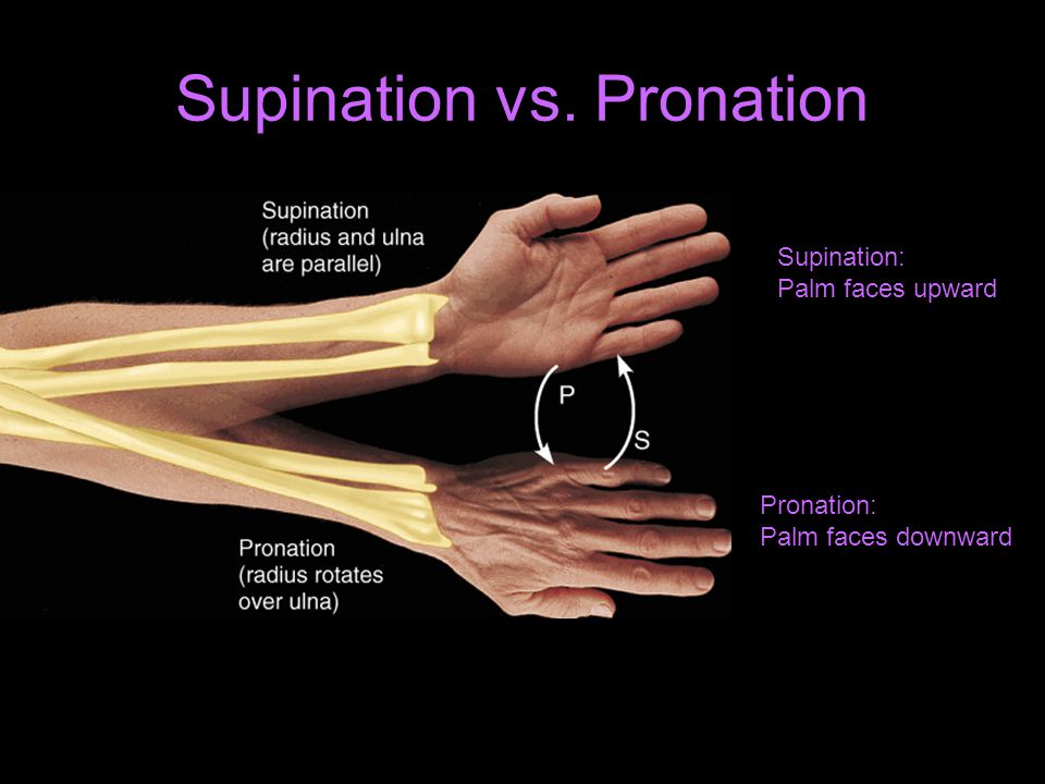 Supination vs. Pronation Supination: Palm faces upward Pronation: Palm faces downward