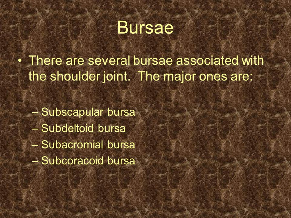 Bursae There are several bursae associated with the shoulder joint. The major ones are: –Subscapular bursa –Subdeltoid bursa –Subacromial bursa –Subco