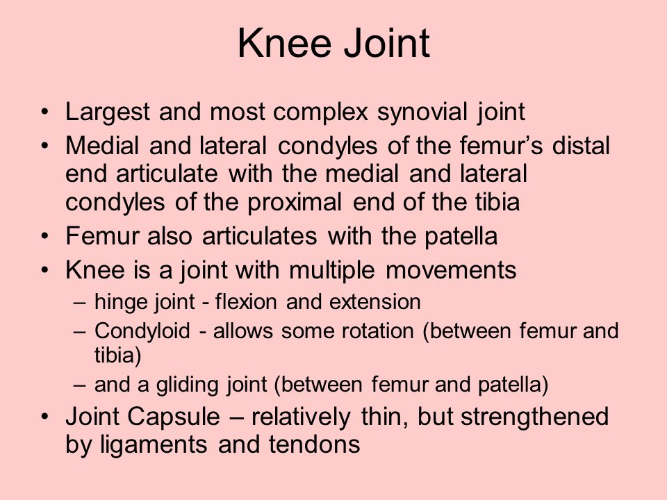 Knee Joint Largest and most complex synovial joint Medial and lateral condyles of the femur's distal end articulate with the medial and lateral condyl