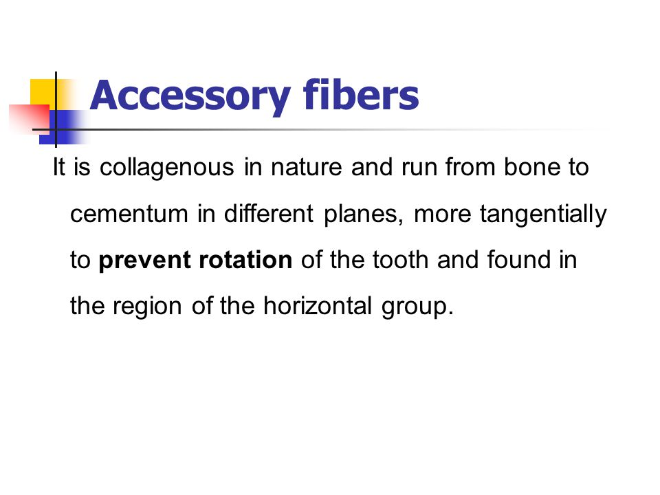 Accessory fibers It is collagenous in nature and run from bone to cementum in different planes, more tangentially to prevent rotation of the tooth and