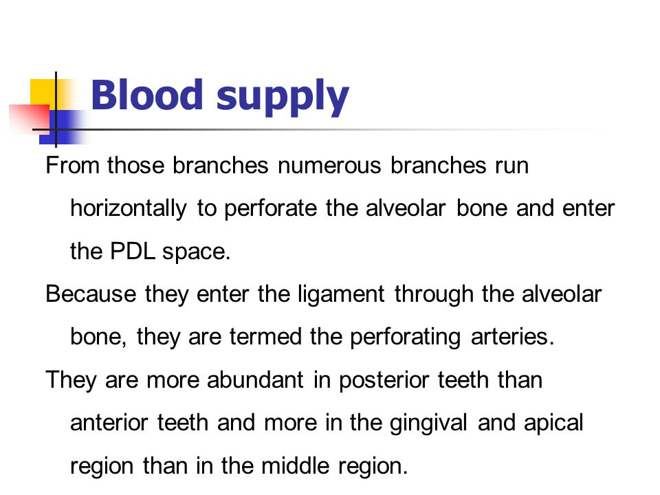 Blood supply From those branches numerous branches run horizontally to perforate the alveolar bone and enter the PDL space. Because they enter the lig