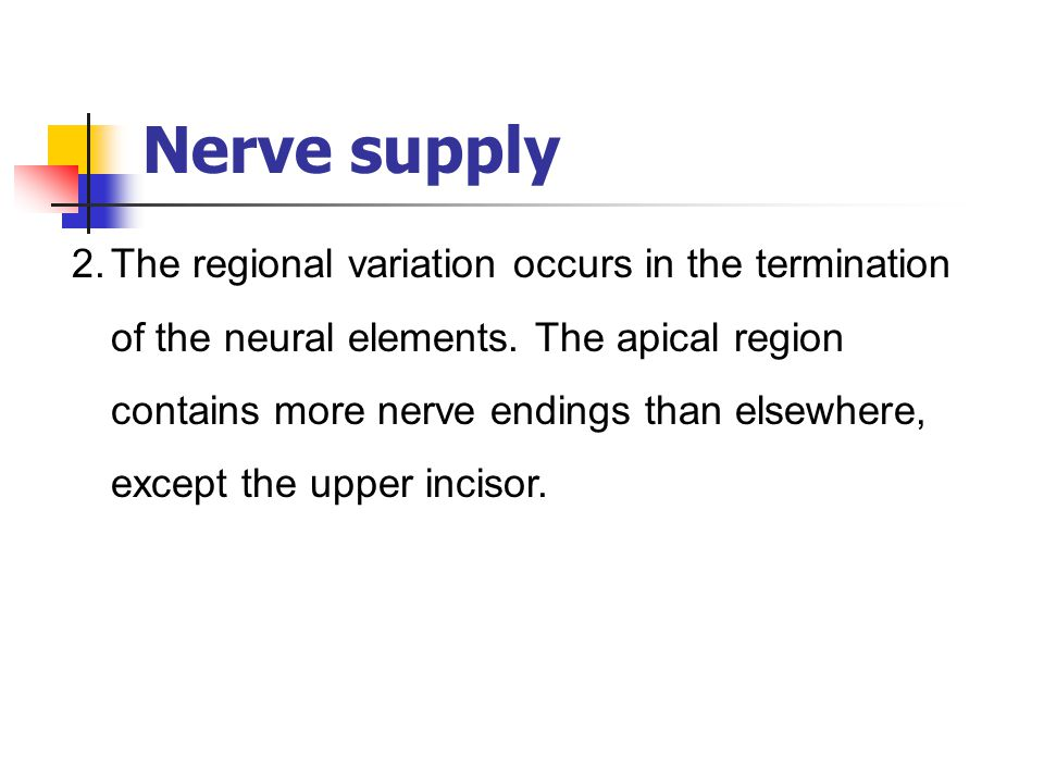 Nerve supply 2.The regional variation occurs in the termination of the neural elements. The apical region contains more nerve endings than elsewhere,