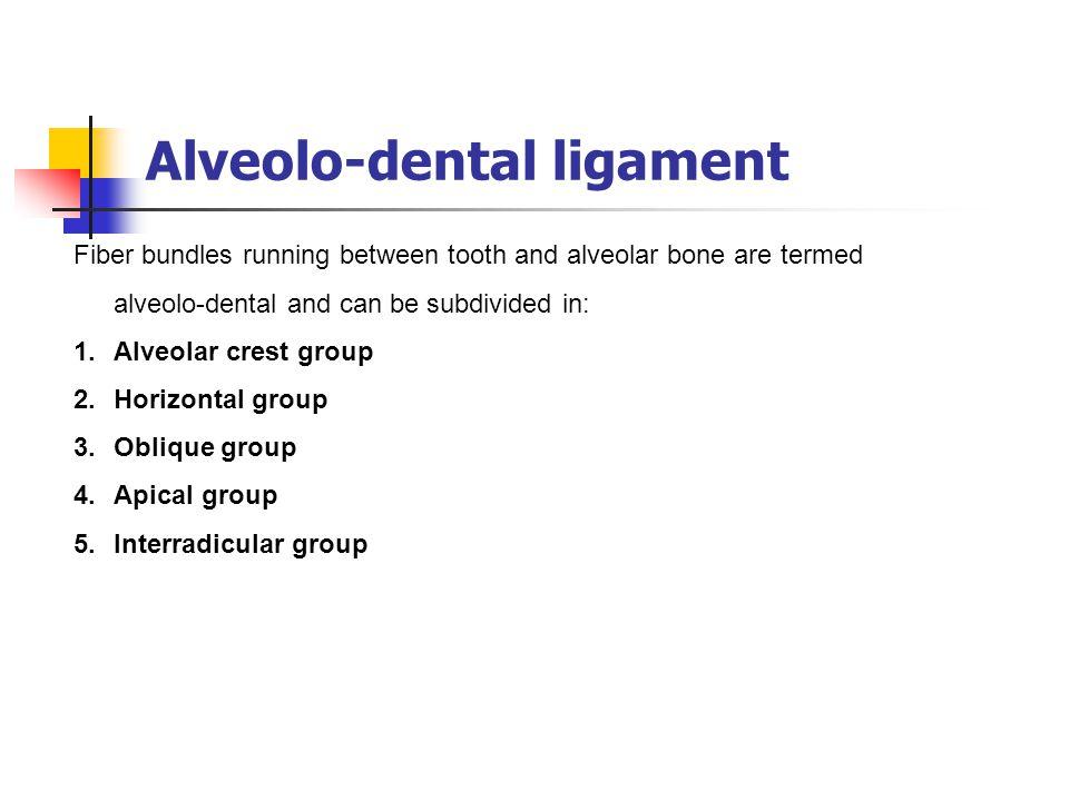 Alveolo-dental ligament Fiber bundles running between tooth and alveolar bone are termed alveolo-dental and can be subdivided in: 1.Alveolar crest gro