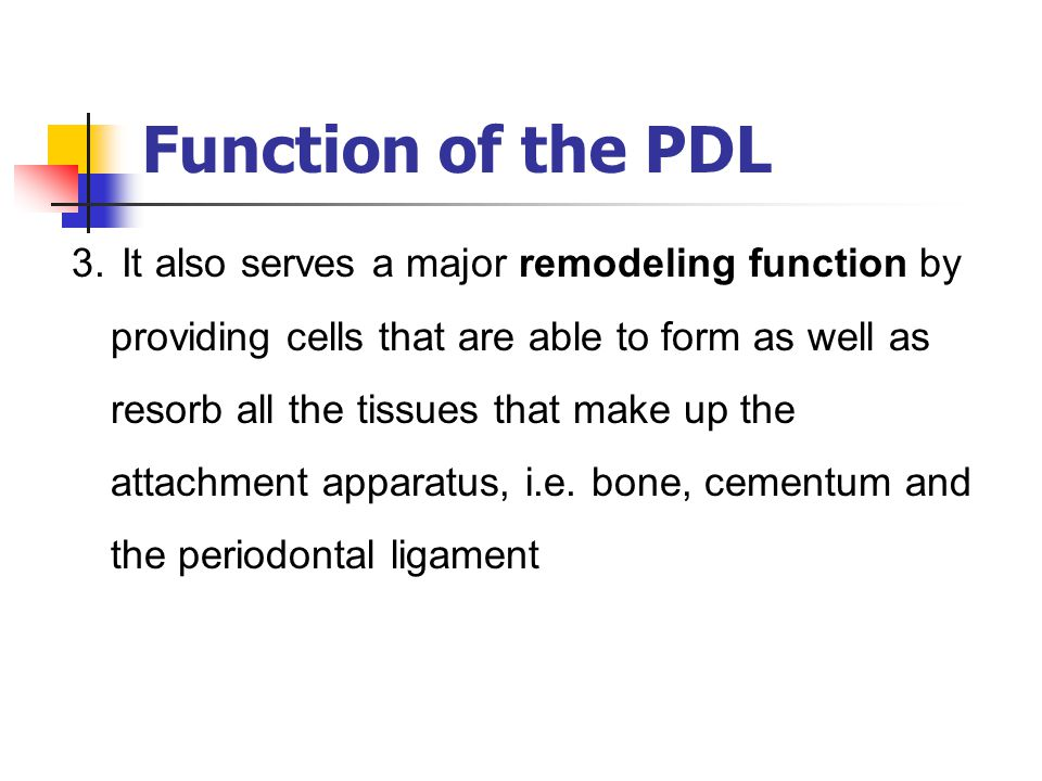 Function of the PDL 3. It also serves a major remodeling function by providing cells that are able to form as well as resorb all the tissues that make