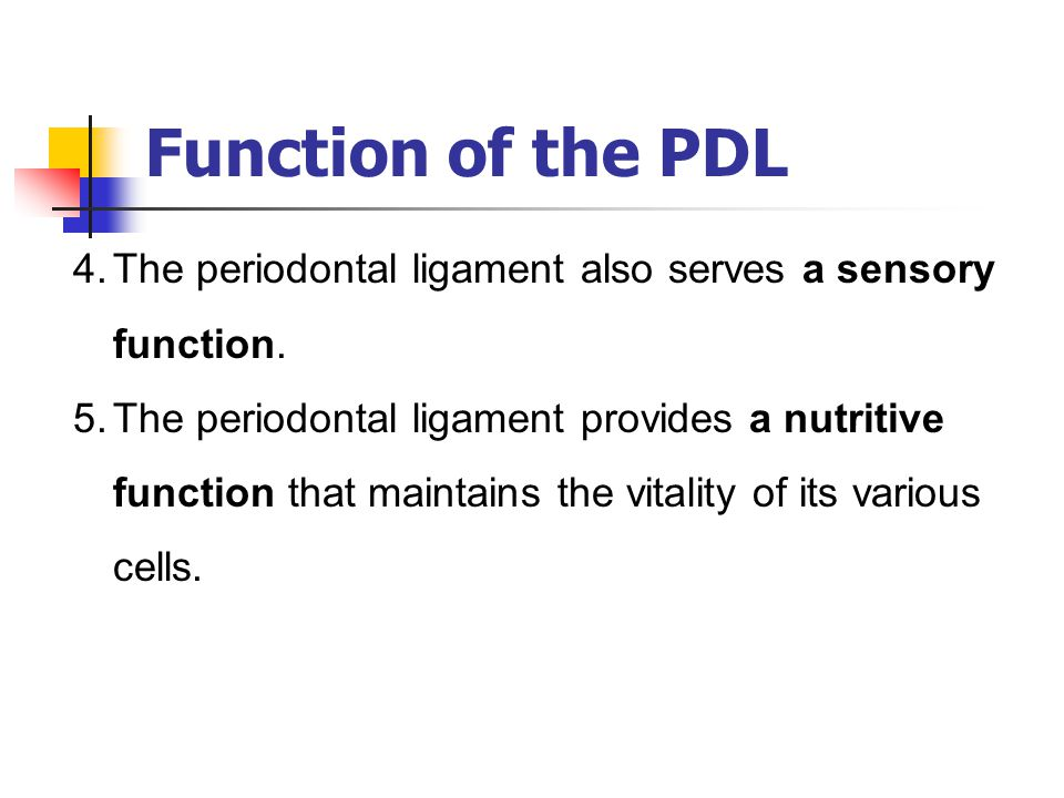 Function of the PDL 4.The periodontal ligament also serves a sensory function. 5.The periodontal ligament provides a nutritive function that maintains