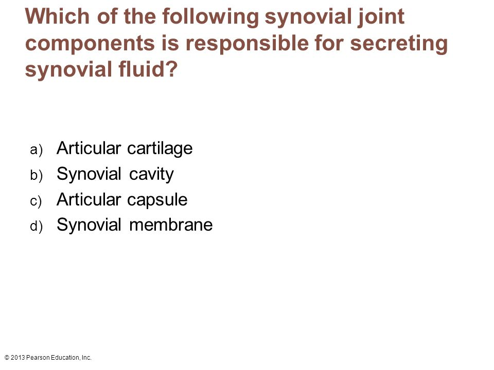 © 2013 Pearson Education, Inc. Which of the following synovial joint components is responsible for secreting synovial fluid? a) Articular cartilage b)