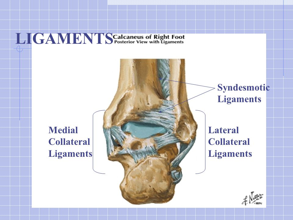 Calcaneus # Management Order Harris (axial view), may need CT Probably should speak to Ortho for all since x-rays under-estimate extent of injury But…non-displaced, extra-articular – NWB cast x 6-8 wks Otherwise, Tx varies considerably and is best determined by Ortho