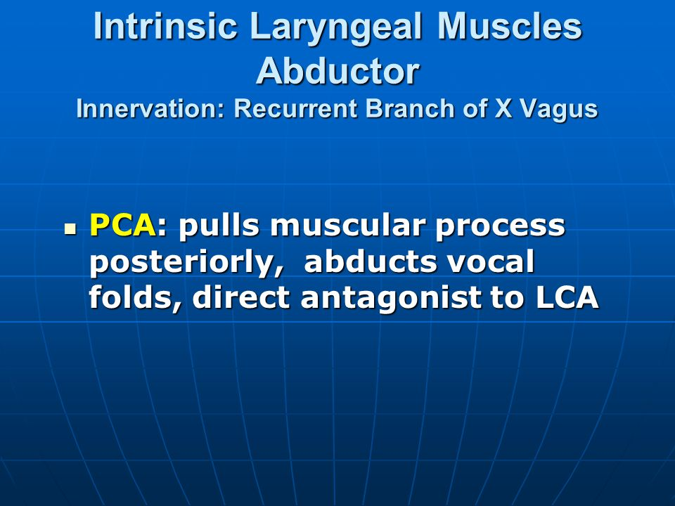 Intrinsic Laryngeal Muscles Abductor Innervation: Recurrent Branch of X Vagus PCA: pulls muscular process posteriorly, abducts vocal folds, direct ant
