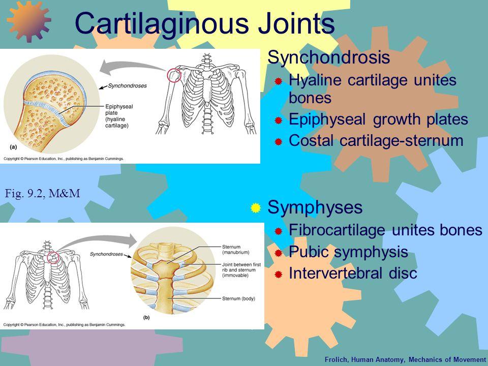 Frolich, Human Anatomy, Mechanics of Movement Cartilaginous Joints  Synchondrosis  Hyaline cartilage unites bones  Epiphyseal growth plates  Costal cartilage-sternum  Symphyses  Fibrocartilage unites bones  Pubic symphysis  Intervertebral disc Fig.