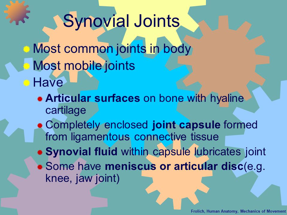 Frolich, Human Anatomy, Mechanics of Movement Synovial Joints  Most common joints in body  Most mobile joints  Have  Articular surfaces on bone with hyaline cartilage  Completely enclosed joint capsule formed from ligamentous connective tissue  Synovial fluid within capsule lubricates joint  Some have meniscus or articular disc(e.g.