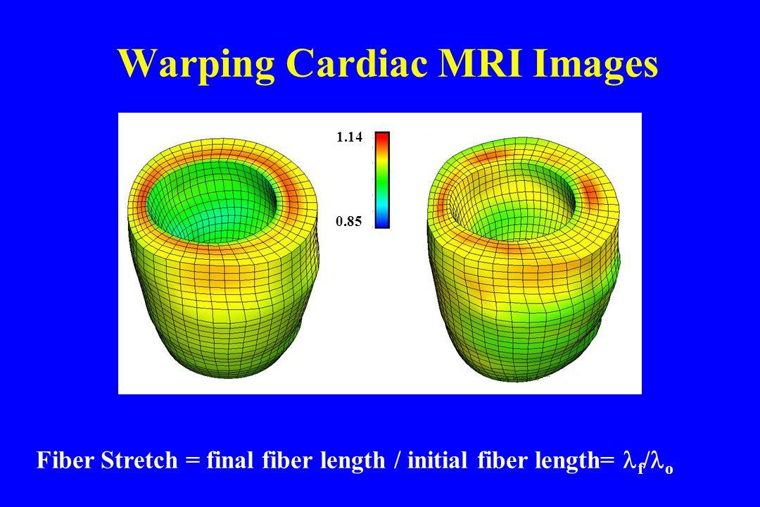 Warping Cardiac MRI Images Fiber Stretch = final fiber length / initial fiber length= f / o 1.14 0.85