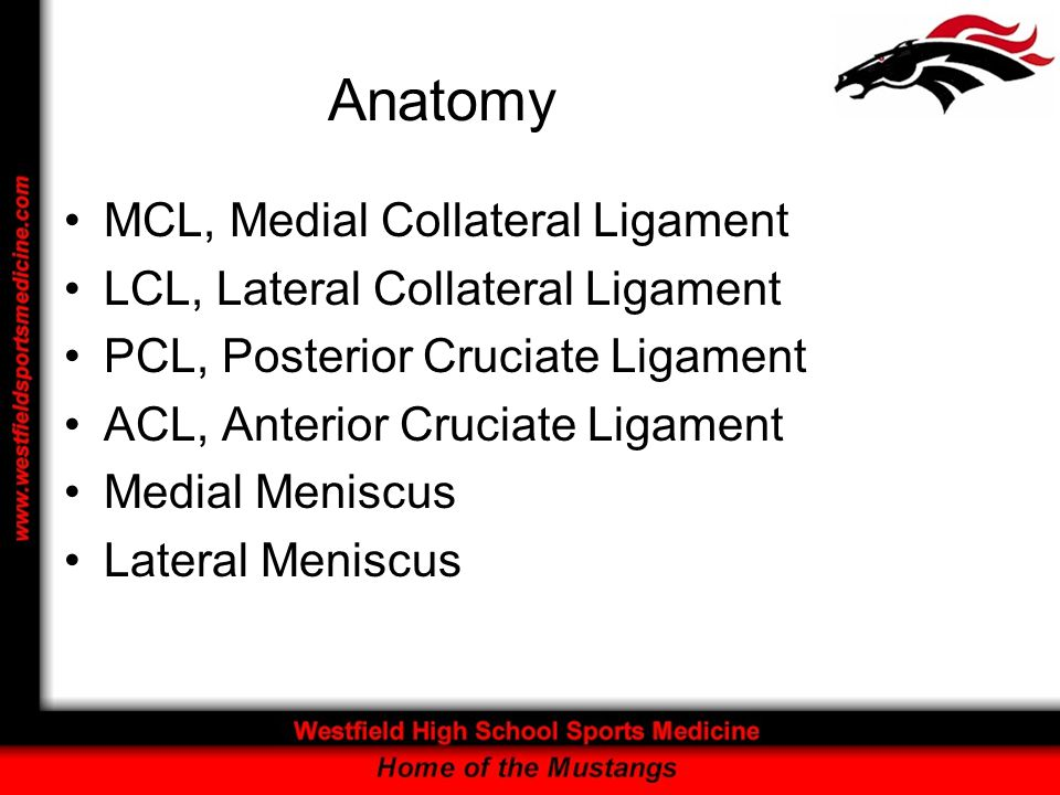 Anatomy MCL, Medial Collateral Ligament LCL, Lateral Collateral Ligament PCL, Posterior Cruciate Ligament ACL, Anterior Cruciate Ligament Medial Menis