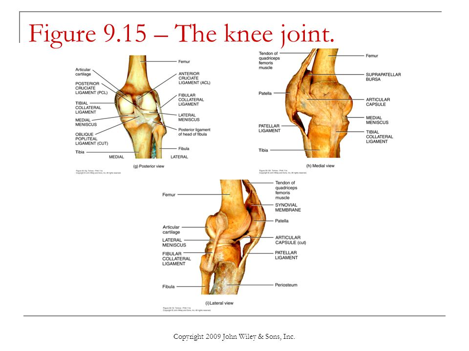 Copyright 2009 John Wiley & Sons, Inc. Figure 9.15 – The knee joint.