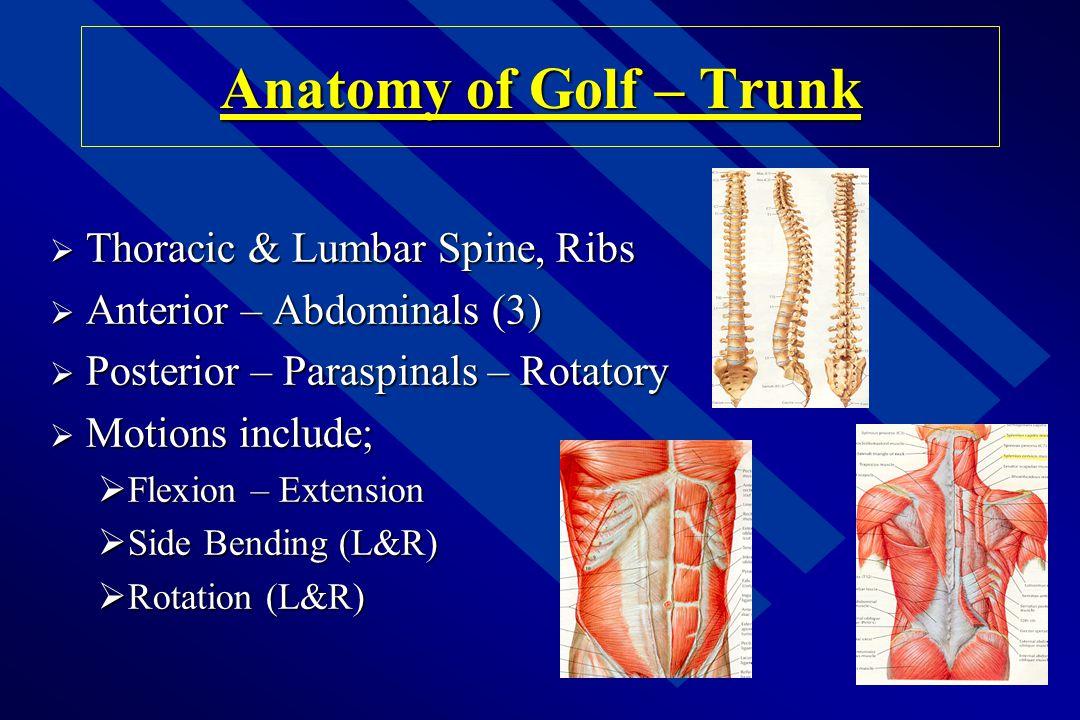 Hip Injuries: Factors n Lack of ROM/Flexibility n Decreased Strength -rotators, abductors -rotators, abductors n Poor Balance n Poor Posture