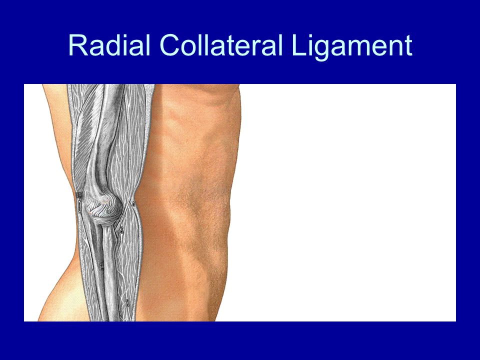 Radial Collateral Ligament