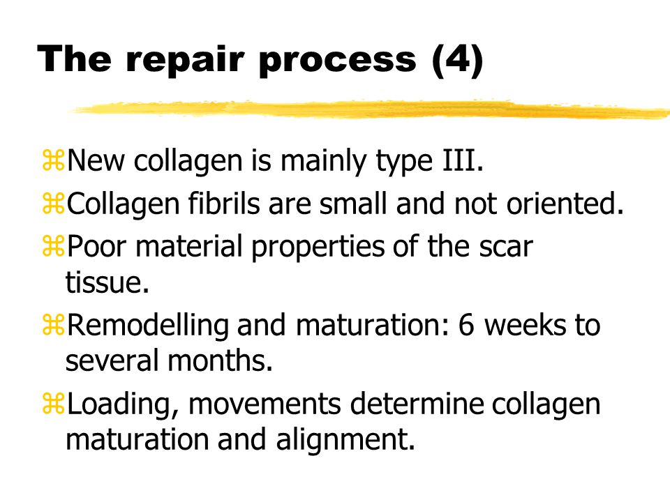 The repair process (4) zNew collagen is mainly type III.