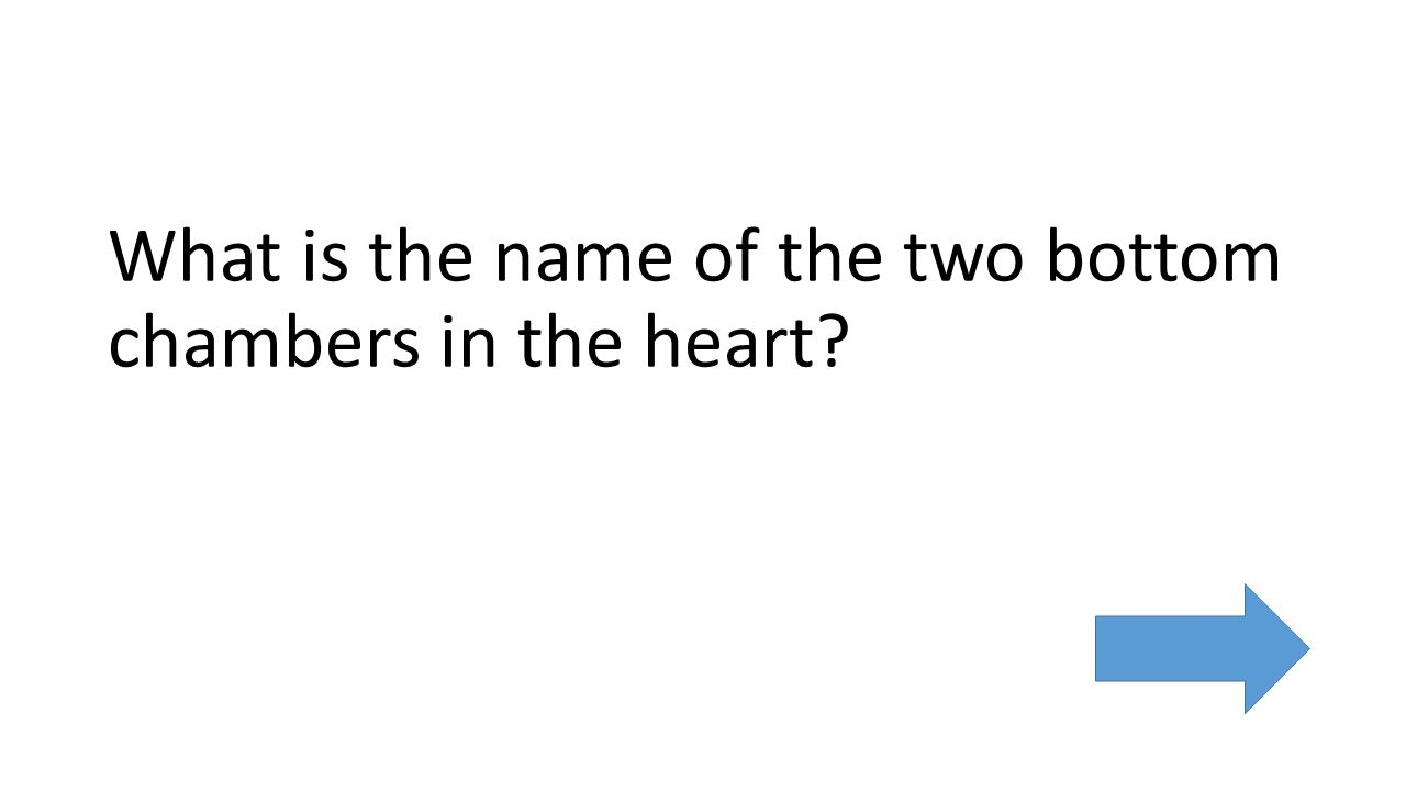 What is the name of the two bottom chambers in the heart