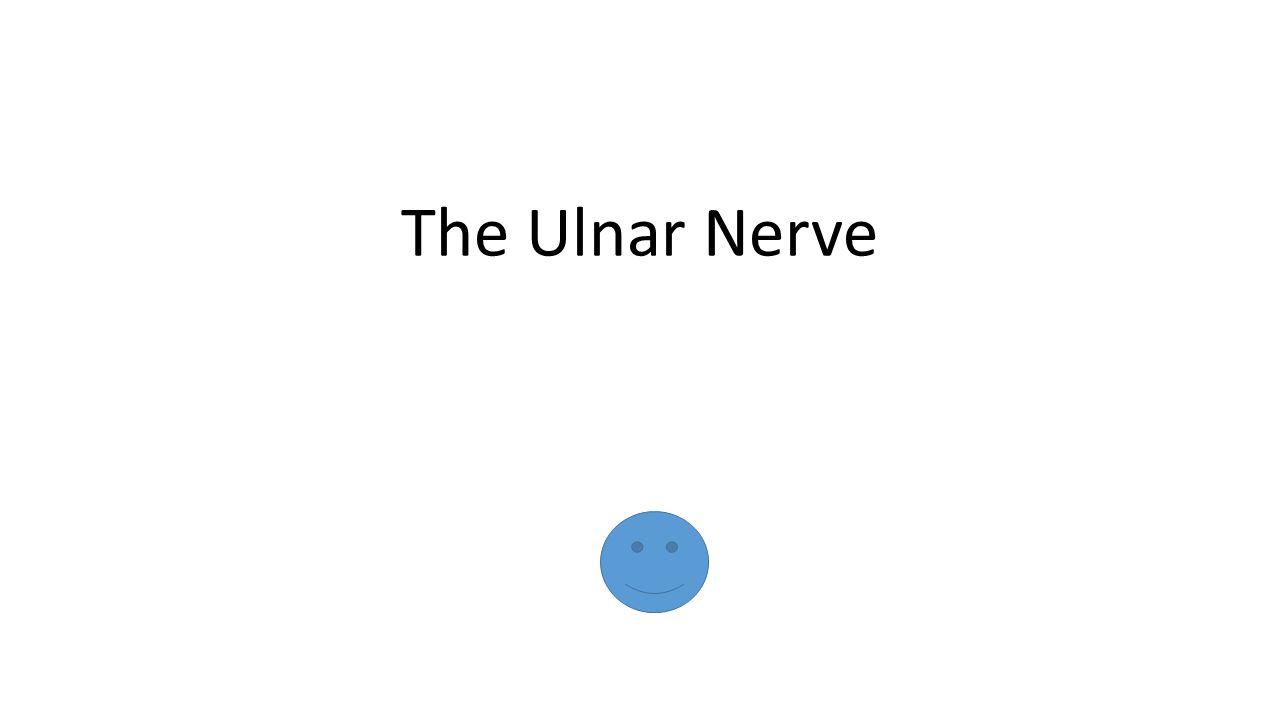 The Ulnar Nerve