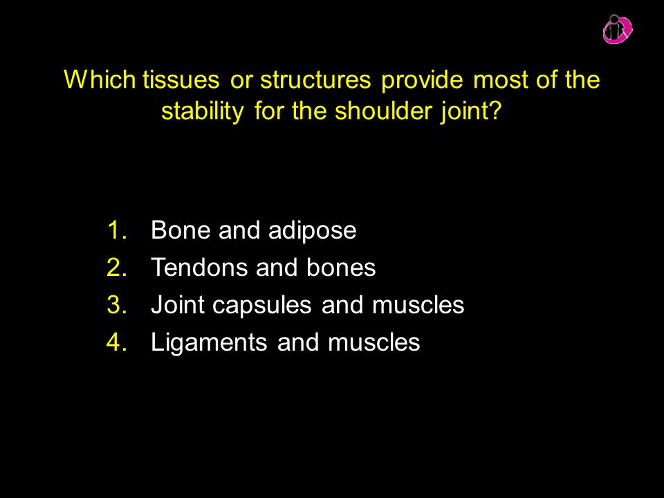 Which tissues or structures provide most of the stability for the shoulder joint? 1.Bone and adipose 2.Tendons and bones 3.Joint capsules and muscles