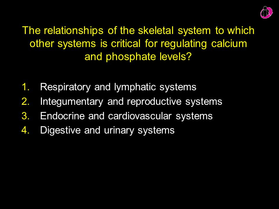 The relationships of the skeletal system to which other systems is critical for regulating calcium and phosphate levels? 1.Respiratory and lymphatic s