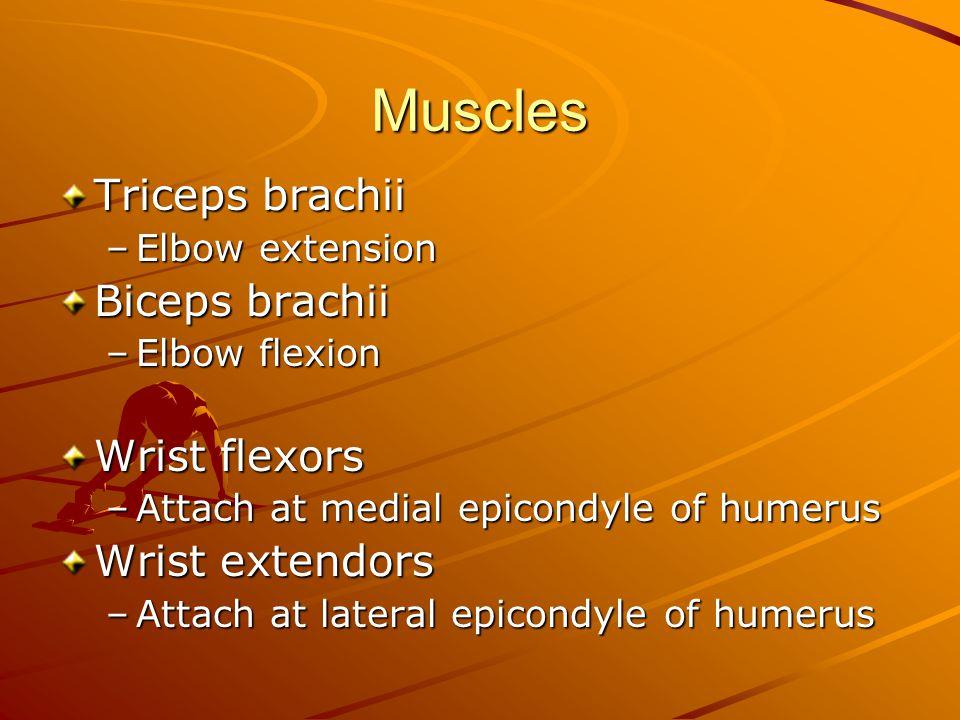 Muscles Triceps brachii –Elbow extension Biceps brachii –Elbow flexion Wrist flexors –Attach at medial epicondyle of humerus Wrist extendors –Attach at lateral epicondyle of humerus