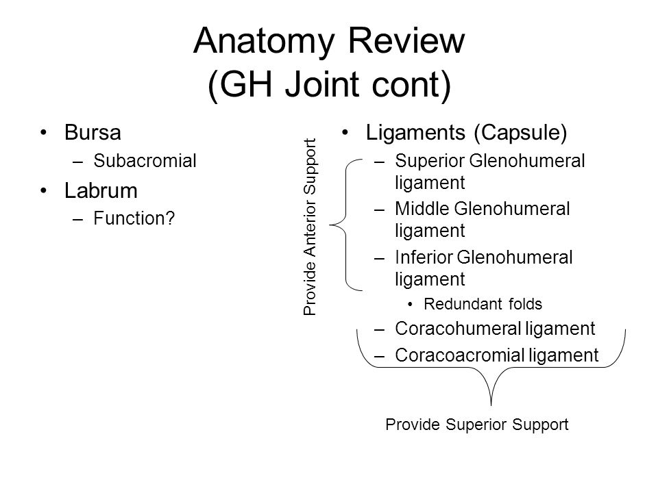 Anatomy Review (GH Joint cont) Bursa –Subacromial Labrum –Function.