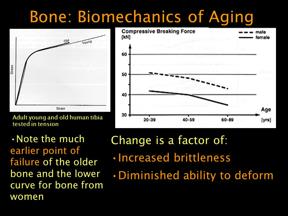 Bone: Biomechanics of Aging Note the much earlier point of failure of the older bone and the lower curve for bone from women Change is a factor of: Increased brittleness Diminished ability to deform Adult young and old human tibia tested in tension