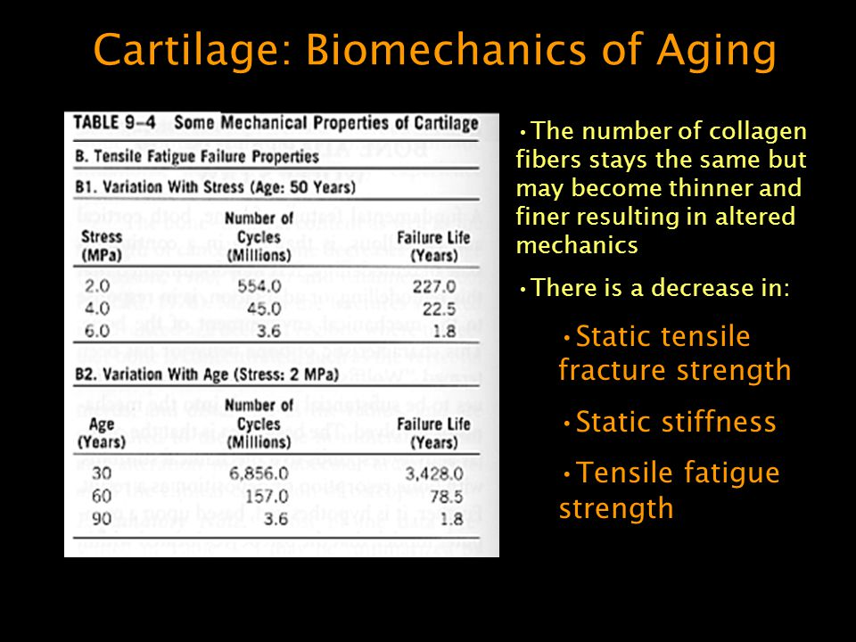 Cartilage: Biomechanics of Aging The number of collagen fibers stays the same but may become thinner and finer resulting in altered mechanics There is a decrease in: Static tensile fracture strength Static stiffness Tensile fatigue strength