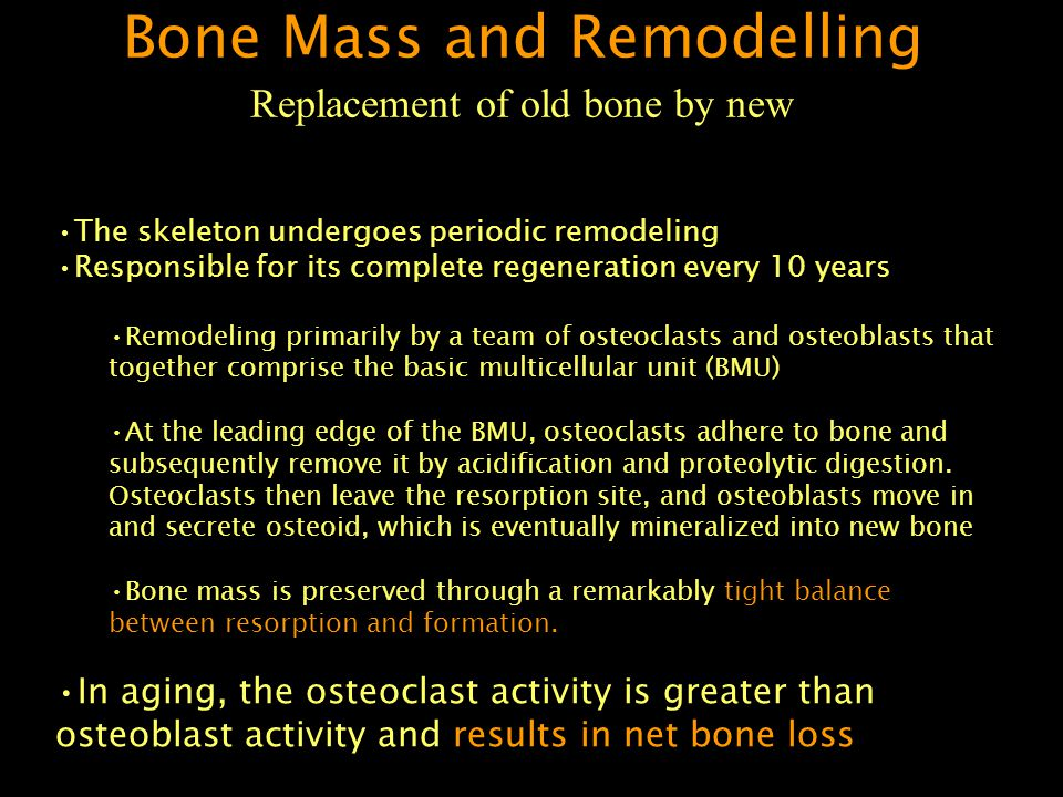 The skeleton undergoes periodic remodeling Responsible for its complete regeneration every 10 years Remodeling primarily by a team of osteoclasts and osteoblasts that together comprise the basic multicellular unit (BMU) At the leading edge of the BMU, osteoclasts adhere to bone and subsequently remove it by acidification and proteolytic digestion.