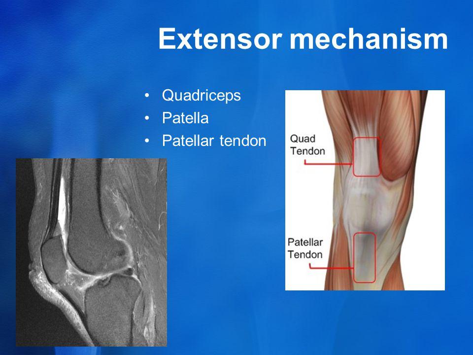 Extensor mechanism Quadriceps Patella Patellar tendon
