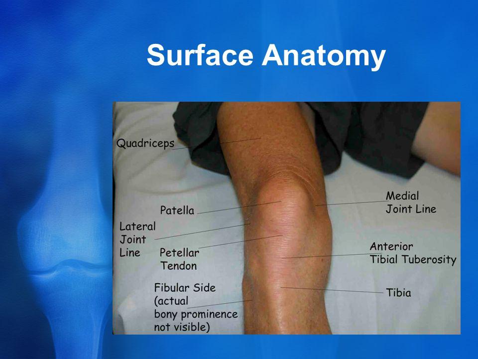 Surface Anatomy