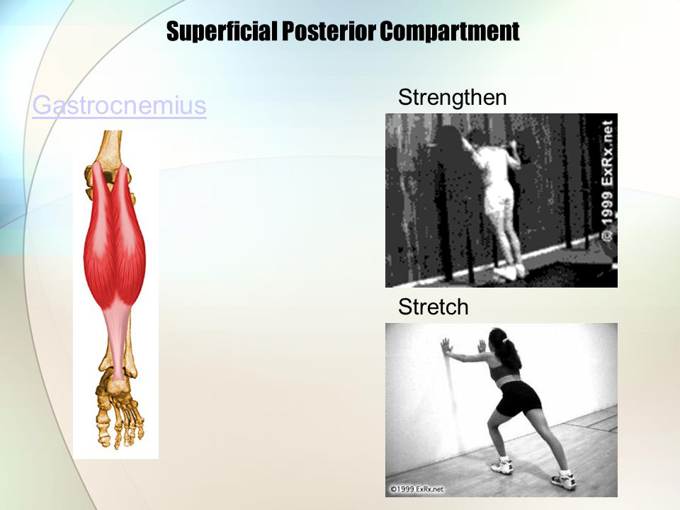 Superficial Posterior Compartment Gastrocnemius Strengthen Stretch