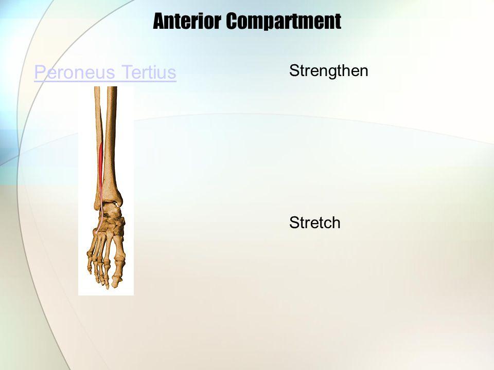 Anterior Compartment Peroneus Tertius Strengthen Stretch