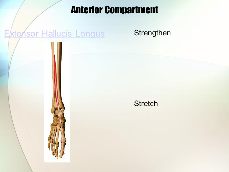 Extensor Hallucis Longus Anterior Compartment Strengthen Stretch