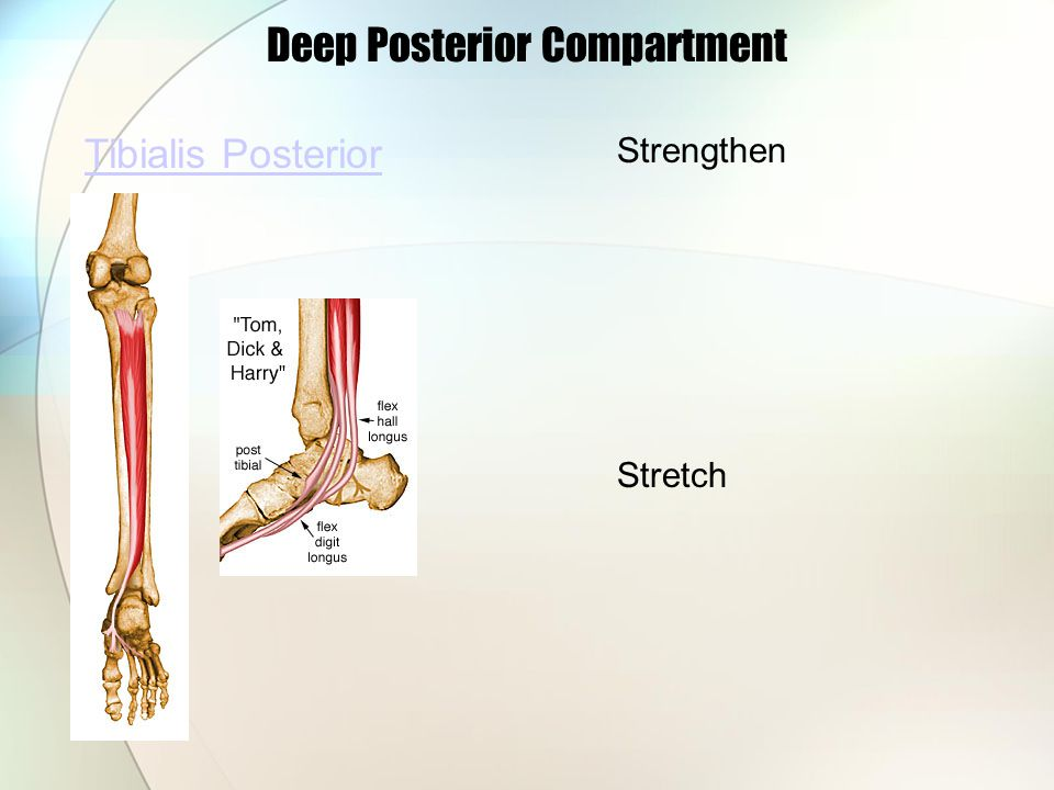 Deep Posterior Compartment Tibialis Posterior Strengthen Stretch
