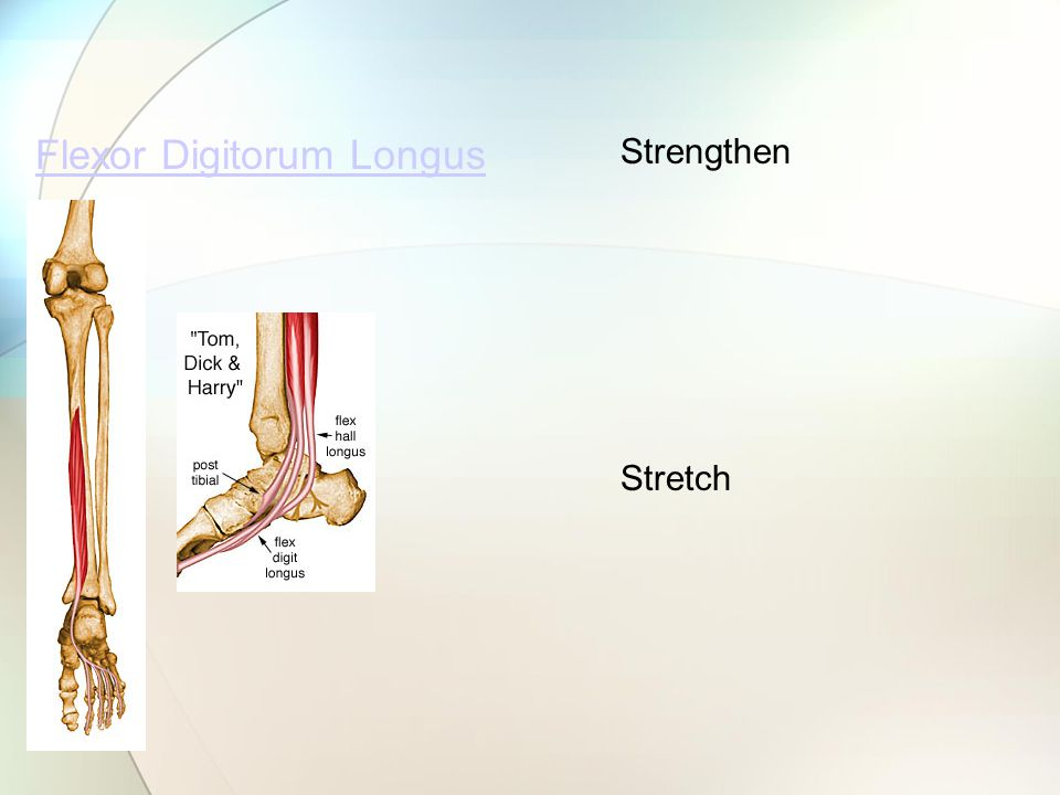 Flexor Digitorum Longus Strengthen Stretch