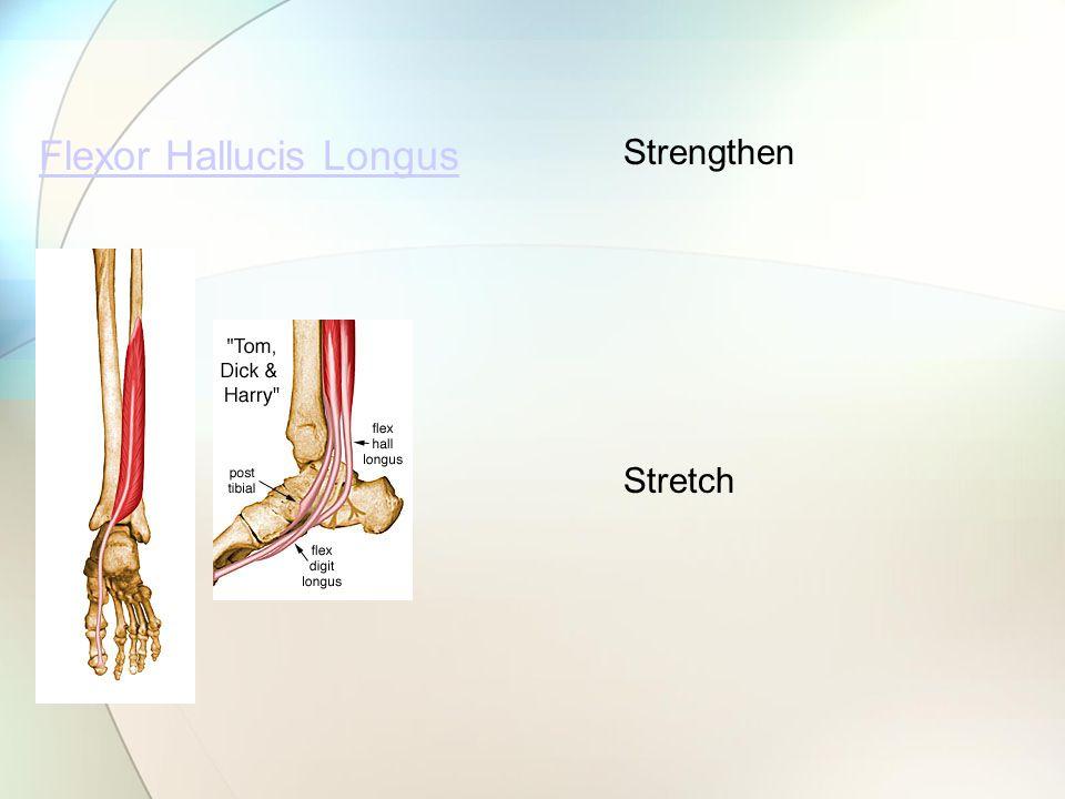Flexor Hallucis Longus Strengthen Stretch